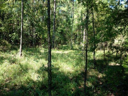 Barnes Cross Road Tract : Ariton : Dale County : Alabama