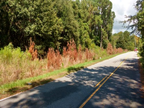 6 Ac Mcclellanville, Sc : McClellanville : Charleston County : South Carolina