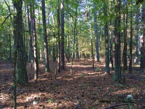 36.9+- Wooded Acres : Kingston : Bartow County : Georgia