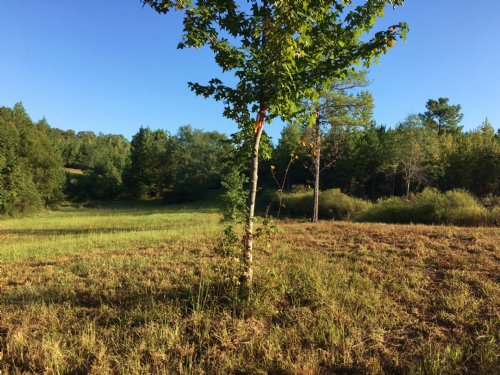 Near Birmingham - 106+/- Acres : Pell City : Saint Clair County : Alabama