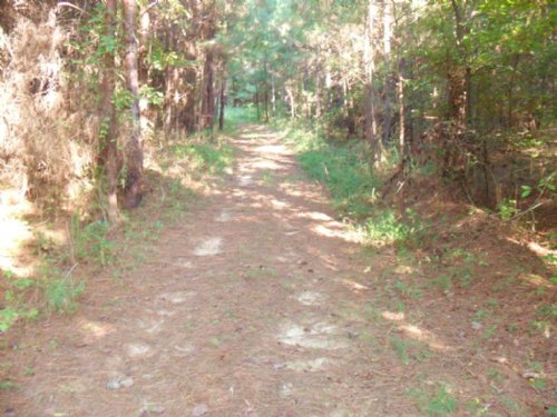 42 Ac. Wooded Land : Bolivar : Hardeman County : Tennessee