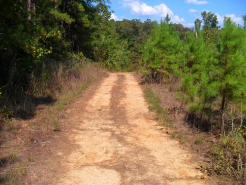 22.74 Ac. Hunting Land Or Hideout : Hornsby : Hardeman County : Tennessee