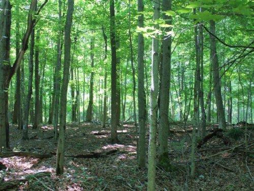 190 Acres Timberland Near Watertown : Rutland : Jefferson County : New York