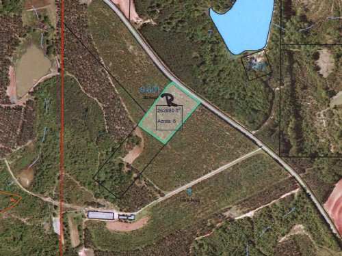 6 Acres With Longleaf Planted Pines : Banks : Pike County : Alabama
