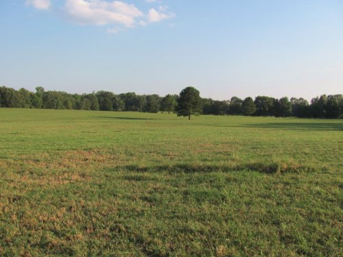 100 +/- Acres, Fenced, Cross Fenced : Gleason : Weakley County : Tennessee