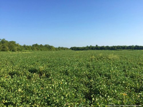 346± Recreation / Investment Tract : Columbus : Lowndes County : Mississippi