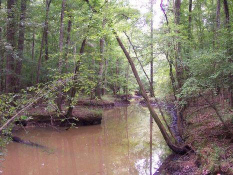 308 Ac Flint River Beechwood Tract : Reynolds : Taylor County : Georgia
