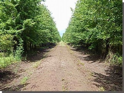 260 Acres In Sharkey County : Rolling Fork : Sharkey County : Mississippi