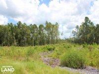 Homesite or Mini Farm Tract : Andrews : Georgetown County : South Carolina