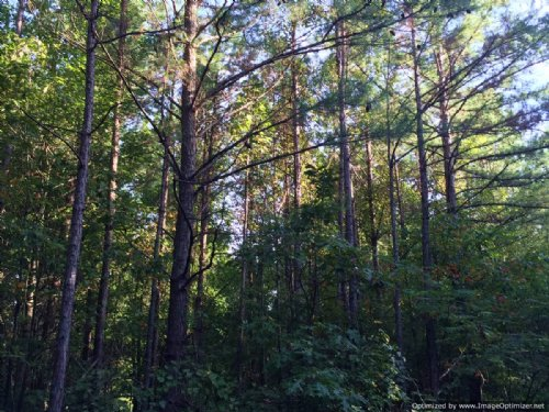 Hunting & Timber Investment Tract : Noxapater : Winston County : Mississippi