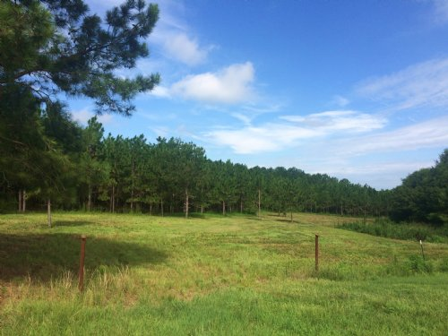 6 Acres : Banks : Pike County : Alabama