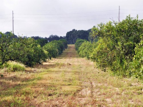 Lake Hatchineha Road Acreage : Haines City : Polk County : Florida