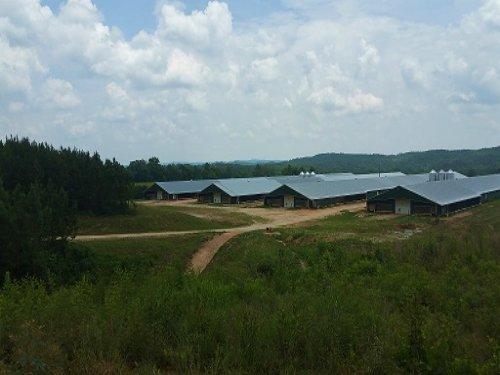 4 Mega House Poultry Farm 35+/- Ac : Heflin : Cleburne County : Alabama