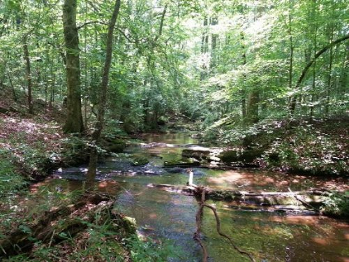 260+/- Acres : Woodland : Randolph County : Alabama