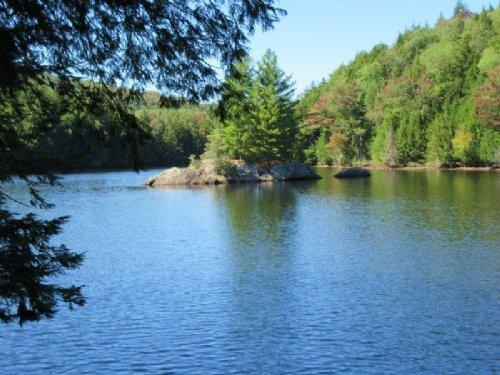 56 Acres Oswegatchie River Timber : Fine : St. Lawrence County : New York