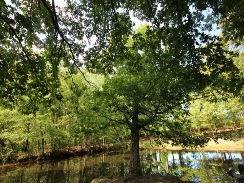 82 Ac Mixture Of Pasture And Woods : Westpoint : Lawrence County : Tennessee