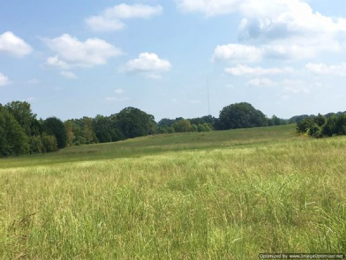 75+/- Ac Rolling Pasture : Raymond : Hinds County : Mississippi