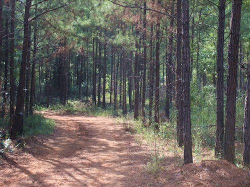 Upscale, Large Acreage Community : Macon : Bibb County : Georgia