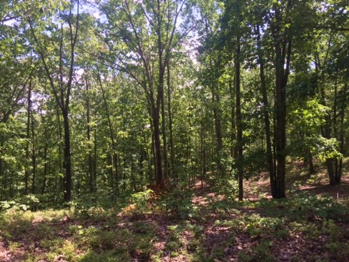 19.97 +/- Wooded Acres, Dallas : Dallas : Paulding County : Georgia