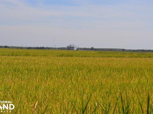 1,114 Acre Rice & Soybean Farm : Brinkley : Monroe County : Arkansas