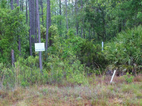 10.82 Acres Price Reduced : Keystone Heights : Clay County : Florida