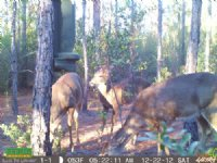 100 Acres For Hunting : Perry : Taylor County : Florida