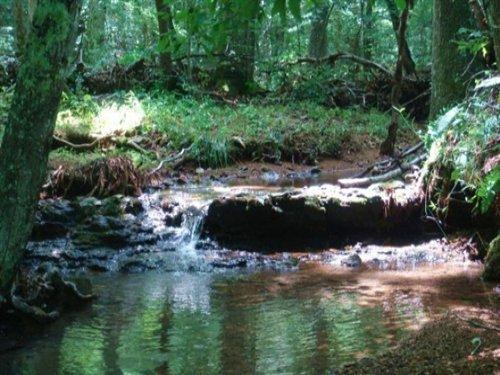 10.66acre Sugartreefallsterm$430 : Waynesboro : Wayne County : Tennessee