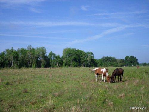 Alicia Acres - 120± Acres : Fort Mc Coy : Marion County : Florida