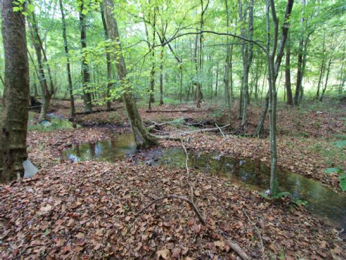 136 Ac Near Tn River, Kentucky Lake : Lobelville : Perry County : Tennessee