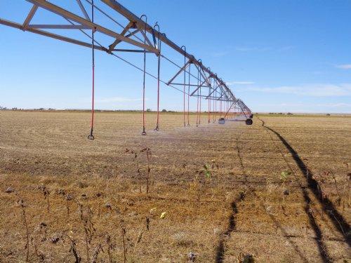 Wiggins Irrigated Farm : Wiggins : Morgan County : Colorado