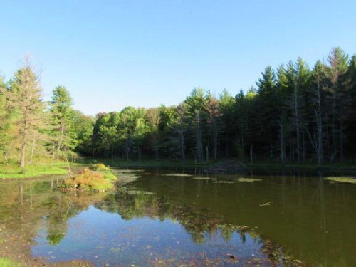 43 Acres Bordering State Forests : Florence : Oneida County : New York