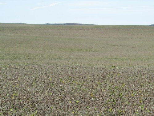 1,353.84+/- Farm Land Acres : Ree Heights : Hand County : South Dakota