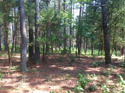 7 Acres + Subdividable : Spotsylvania County : Virginia