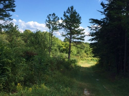 24+/- Acres Unrestricted Wooded : Gruetli Laager : Grundy County : Tennessee