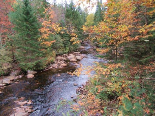 566 Acres Timberland Adirondacks : Remsen : Oneida County : New York