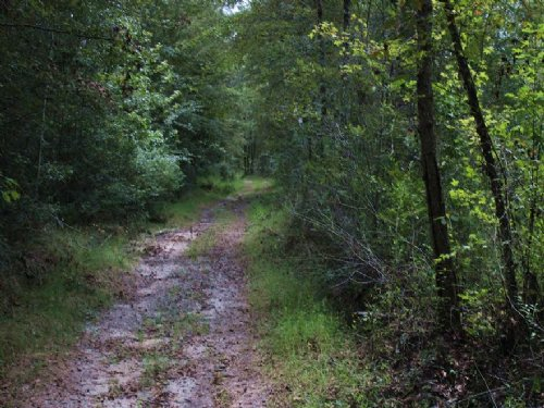 Excellent Hunting Opportunities : Abbeville : Wilcox County : Georgia