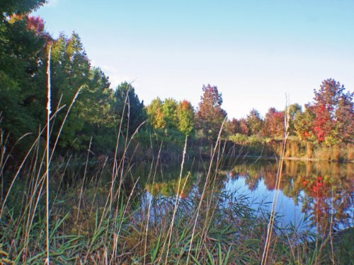 29 Acres In Canadice Beautiful Pond : Canadice : Ontario County : New York