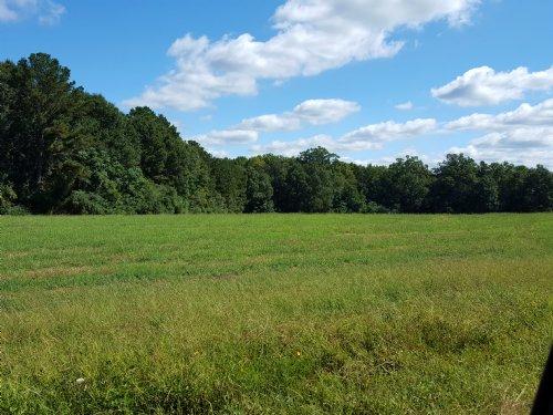 30 Acres Of Beautiful Pasture : Comer : Oglethorpe County : Georgia