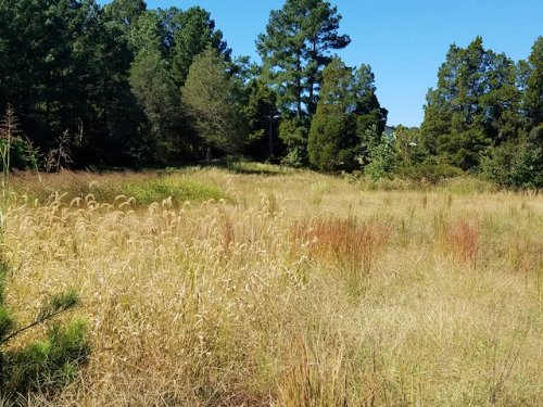 1.35 Acre Lot : Paris : Henry County : Tennessee