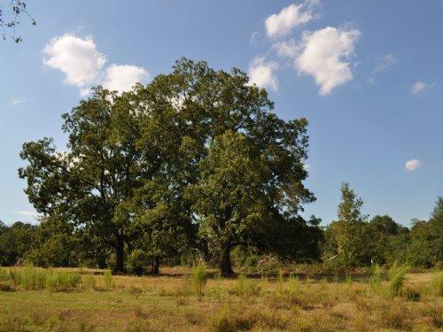 Triple Creek Farm : Crawford : Oglethorpe County : Georgia