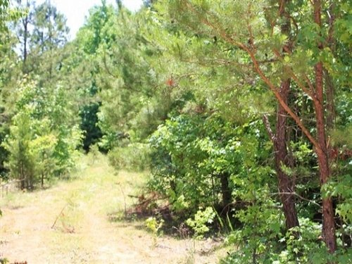 6.1 Acre Hickory Hill Ranch : Bath Springs : Decatur County : Tennessee