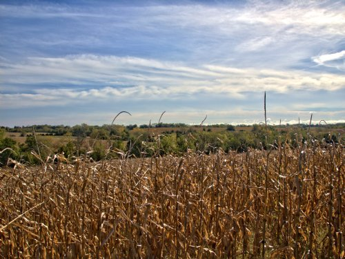 160 Acres; Field Dr : Browning : Linn County : Missouri