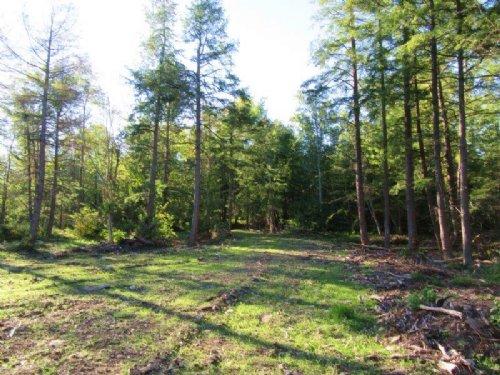 6 Acres Near Salmon River Financing : Richland : Oswego County : New York