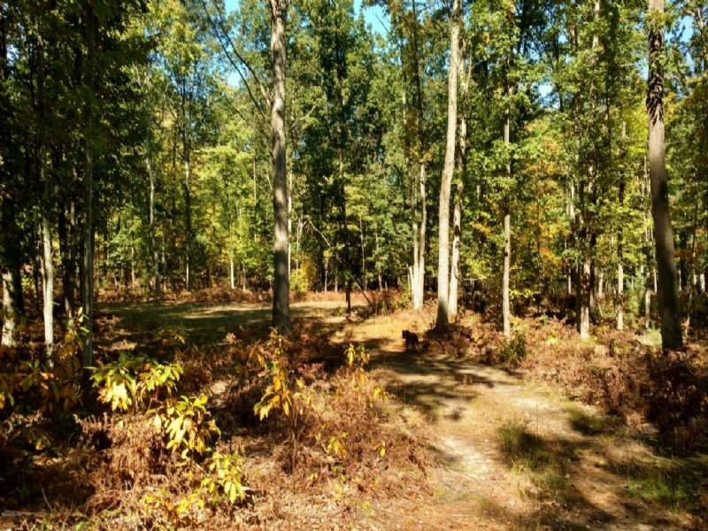 Beautiful Piece Of Hunting Land : Custer : Mason County : Michigan