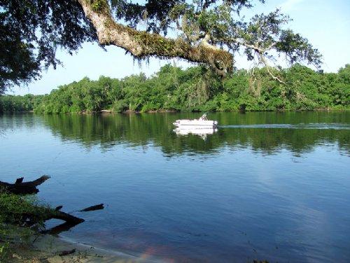 Suwannee River Oaks : Trenton : Gilchrist County : Florida