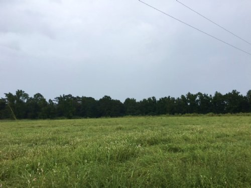 6 Acres Mt. Hermon, La : Mount Hermon : Washington Parish : Louisiana