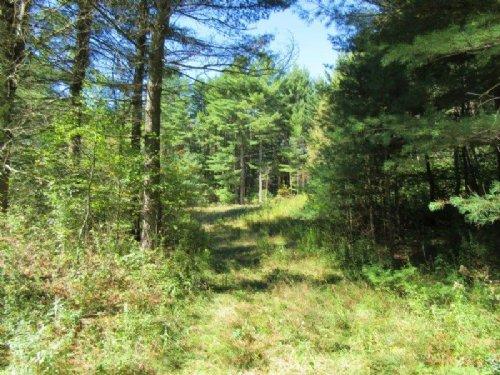 24 Acres Adirondack Park Build Site : Diana : Lewis County : New York