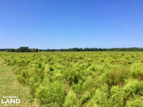 The Wilmer Willis Farm Tract : Wilmer : Mobile County : Alabama