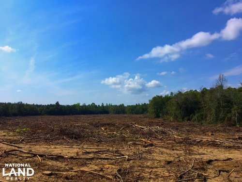 Pageland Hunting Land : Jefferson : Chesterfield County : South Carolina