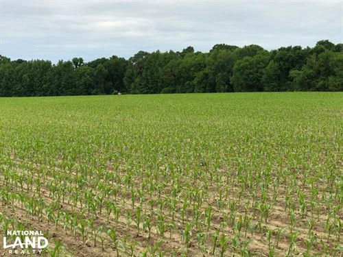80+/- Acres Farmland & Hunting Prop : De Witt : Arkansas County : Arkansas